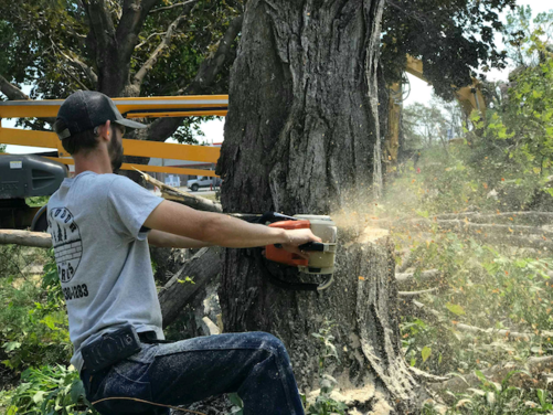 Picture of our ground crew cutting down a tree for tree removal in Iowa City, IA